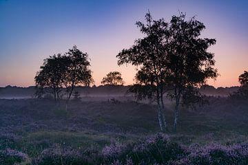 heideveld bij zonsopkomst van Tanja de Mooij