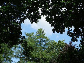 bomen in een blauwe lucht van Brigitte Koster