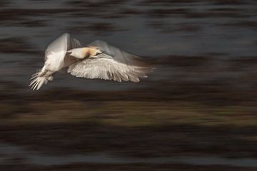 Jan van Gent in de vlucht van Peter Lambrichs