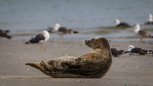 Zeehond geniet van de zomer