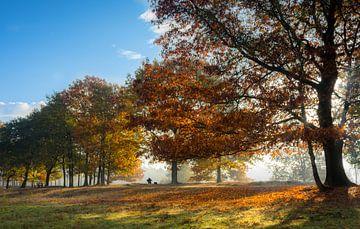 Onbekende Herfstfotograaf van Boris de Weijer