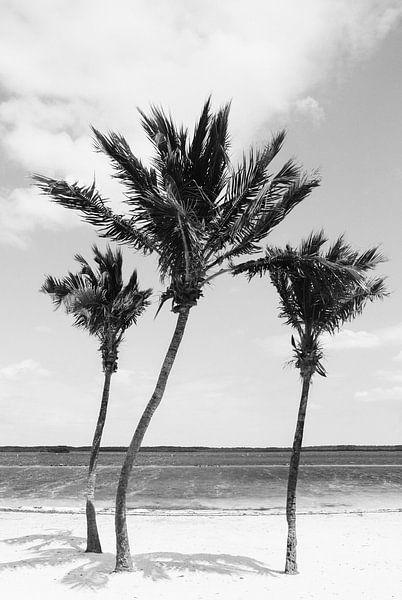 Tropische Palmen   Schwarz-Weiß-Fotografie   Florida   Strand von Mirjam Broekhof