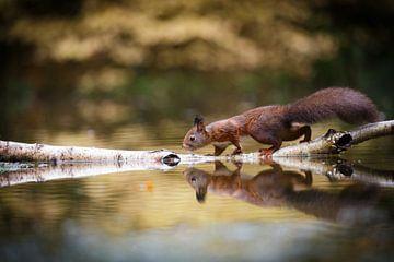 Eekhoorntje met reflectie