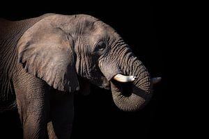 Drinkende olifant van