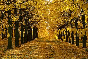 Herbst im Kirschenwald van Claudia Moeckel