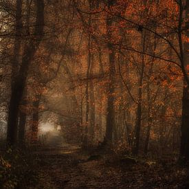 Het betoverende bos van Moetwil en van Dijk - Fotografie