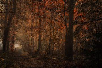 Het betoverende bos