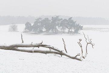 Im Schnee – Nationalpark De Loonse en Drunense Duinen von Laura Vink