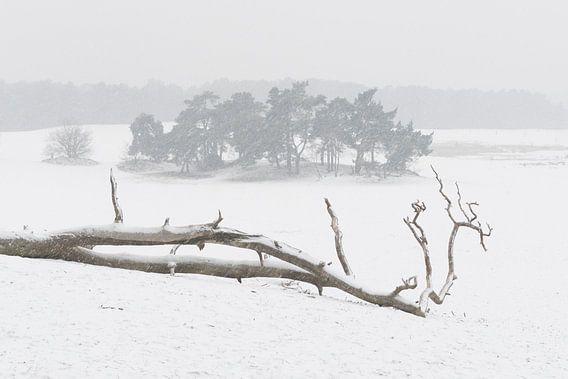 In de sneeuw - Loonse en Drunense Duinen