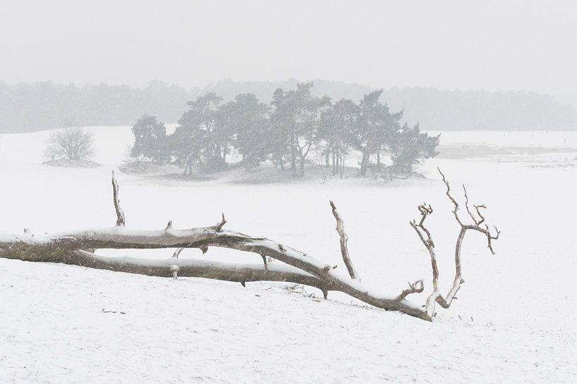 In de sneeuw - Loonse en Drunense Duinen van Laura Vink