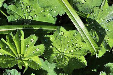 Verse regendruppels op een close-up van een groen blad van MPfoto71