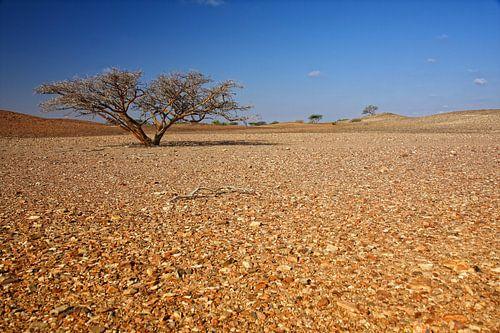 Eenzame boom in de woestijn