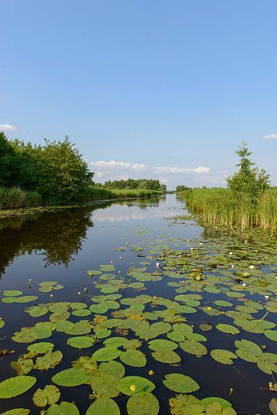 Wieden landschap van Sjoerd van der Wal