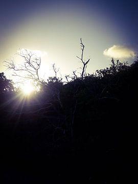 De schoonheid vd ondergaande zon van Natascha Meriana