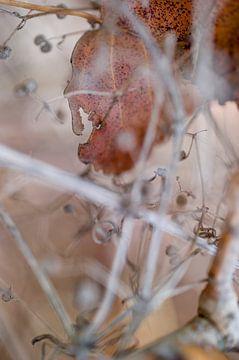 Macro (close-up) van abstracte herfst natuur met herfstbladeren van John Quendag