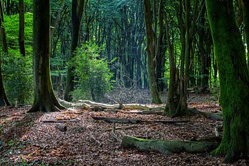 Het verlichte bos van Marc Arts