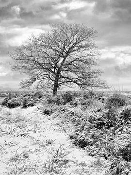 Winterlandschap met eenzame boom in de sneeuw bedekte heide 2 van Tony Vingerhoets