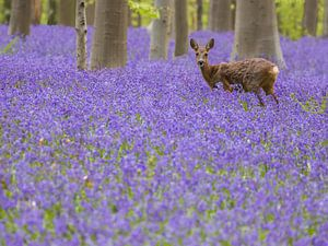 Was raschelt denn da durch die Hyazinthen am Wald? - Teil 2 von Gunther Cleemput