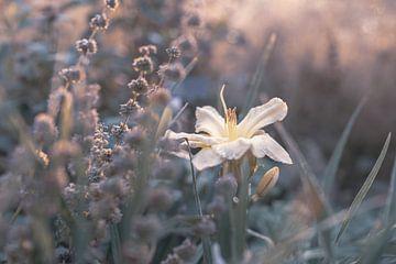 Blumen Teil 177