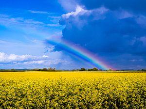Regenboog boven koolzaad in de Franse Val de Saône