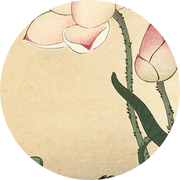 Waterhoen bij bloeiende lotus, Ohara Koson