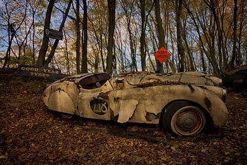 Verlassener Jaguar von Carola Schellekens