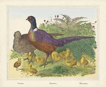 Fazanten, firma Joseph Scholz, 1829 - 1880
