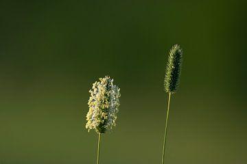 Gras von Stefan Heesch