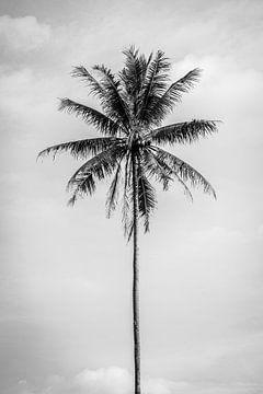 Schwarz-weiße Palme in Bali von Ellis Peeters