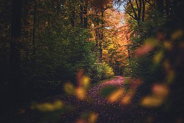Kleurrijk pad in het herfstbos van Florian Kunde