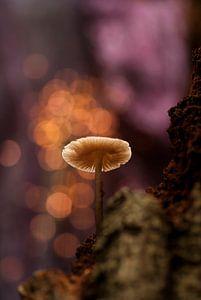 Herfstfantasie met een paddenstoel