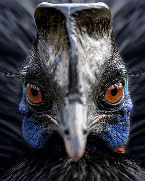 Nahaufnahme eines Oranjehalskasuars von Patrick van Bakkum