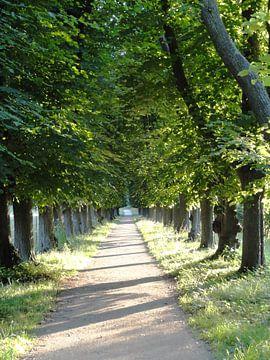 Zomerse wandeling van Lotte Veldt