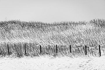 Gras duinen in zwart/wit van