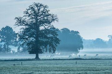 Einsame Eiche in der Landschaft von Twenthe. von Ron Poot