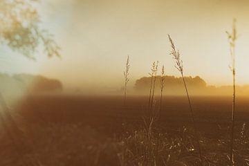 ochtendglorie van Karin vanBijleveltFotografie