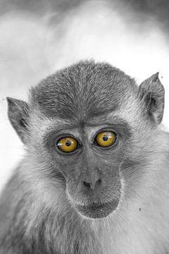 Affen Portrait