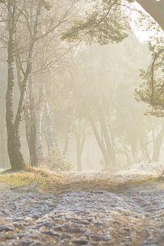 Kalt und neblig, aber immer noch ein warmes Gefühl, die Sonne am Morgen von Michel Geluk