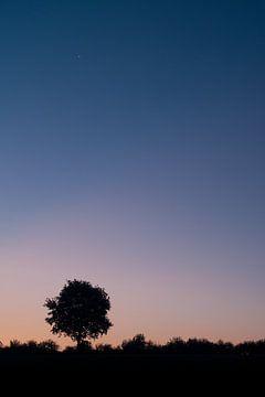 Eenzame boom van Douwe Schut