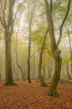 Mistig beukenbos in de herfst van Sjoerd van der Wal