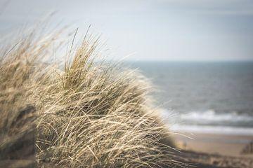 Closeup van duingras aan de Nederlandse kust
