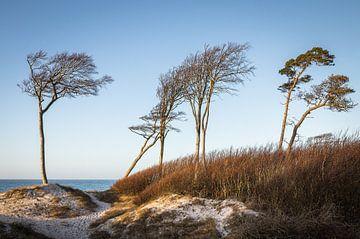 Düne am Weststrand von Jürgen Schmittdiel Photography