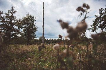 Blick über das Land von Bjorn Cornelissen