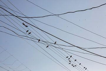 Oiseaux sur les câbles et fils sur le poteau électrique, fils en désordre attachés au poteau électri sur Tjeerd Kruse