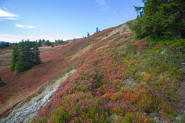 Herbstliche Farben in den österreichischen Bergen von Marco Leeggangers