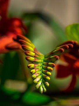 bunte Blume