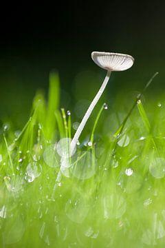 Pilz im Gras von Marco de Groot