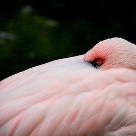 Flamingo van Anne Seltmann