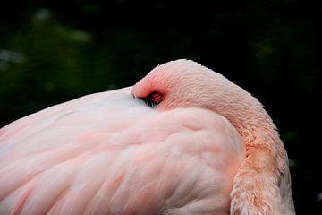Flamingo von Anne Seltmann