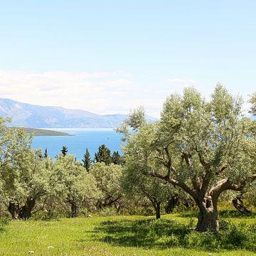 De olijfgaard met uitzicht op de Ionische zee